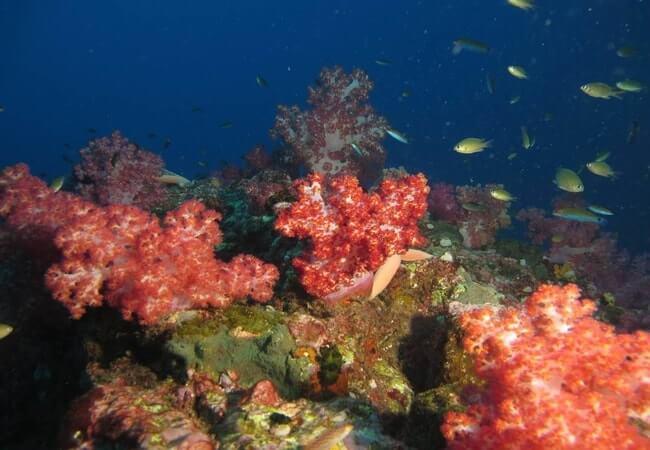 Mergui Archipelago 2