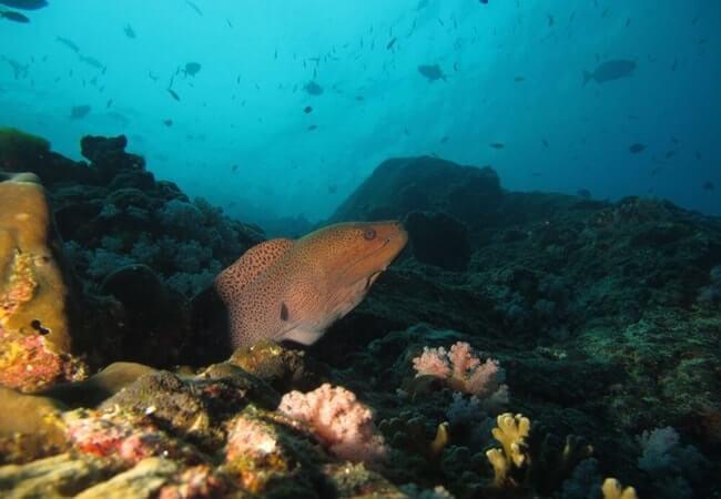 Mergui Archipelago 3